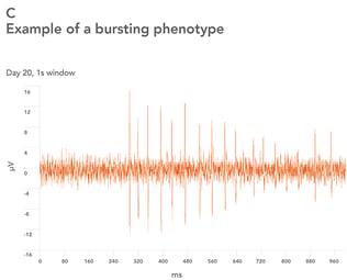bb-neurons_MEA-Bursting-3-opt