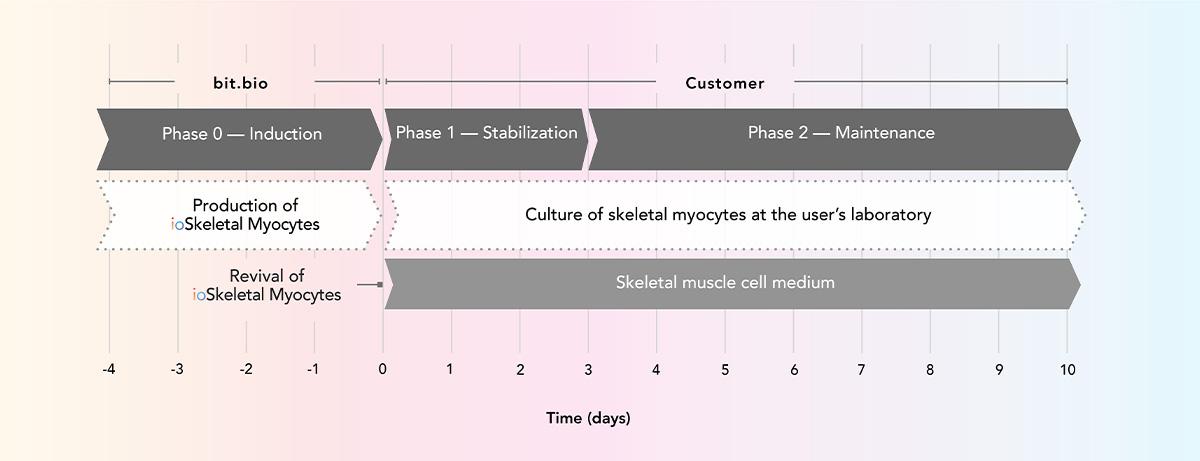 Figure 7 Myocyte cells arrive ready to plate