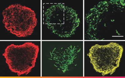 Advances in cellular reprogramming: from stem cells to printed tissues
