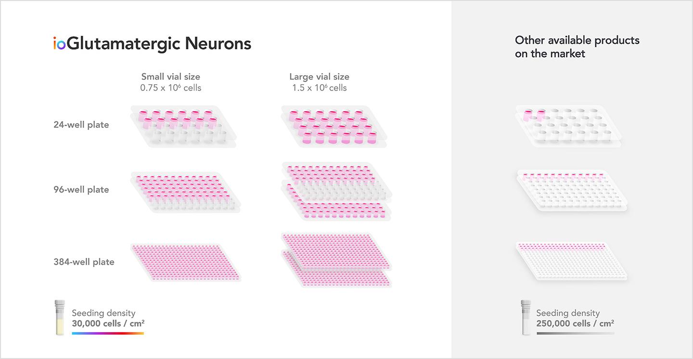 cost effective bit.bio ioGlutamatergic Neurons