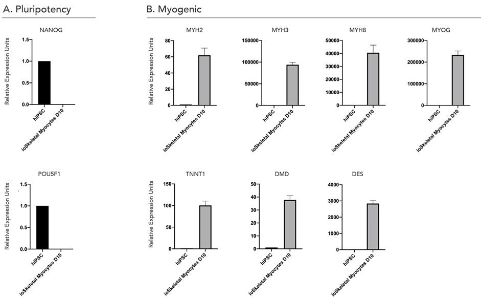 myocyte gene expression C447