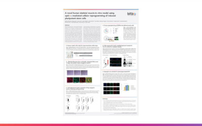 A novel human skeletal muscle in vitro model using opti-ox™ mediated cellular reprogramming of induced pluripotent stem cells