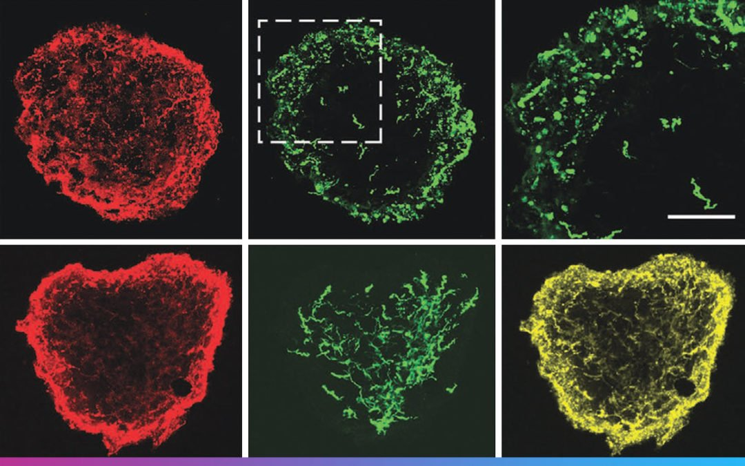 Lipid-Bilayer-Supported 3D Printing of Human Cerebral Cortex Cells Reveals Developmental Interactions