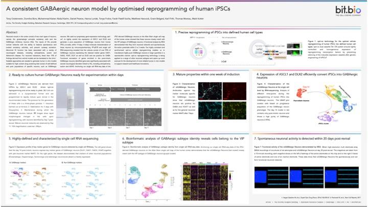 ioGABAergic neuron poster